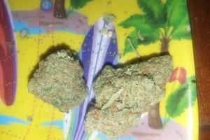 Orange Sherbet Marijuana Strain image