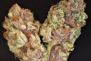 The OX Marijuana Strain image