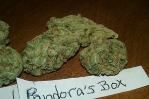 Pandora's Box Marijuana Strain image