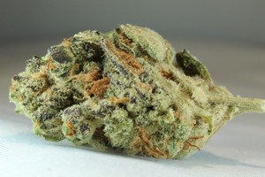 Peanut Butter Breath Marijuana Strain image