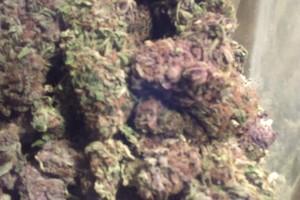 Pink Kush Marijuana Strain image