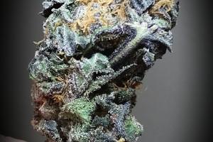 Purple AK-47 Marijuana Strain image