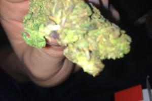 Purple Cheese Marijuana Strain image