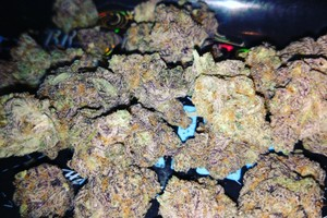 Purple Dragon Marijuana Strain image