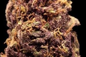 Purple Power Marijuana Strain image