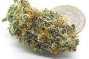 Purple Punch Marijuana Strain image