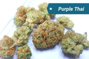 Purple Thai Marijuana Strain image