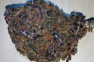 Purple Urkle Marijuana Strain image