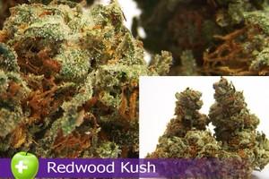 Redwood Kush Marijuana Strain image