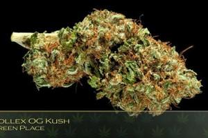 Rollex OG Kush Marijuana Strain image
