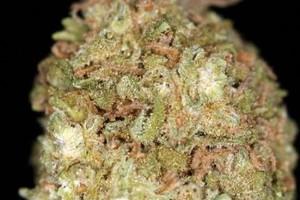 Royal Mix Marijuana Strain image