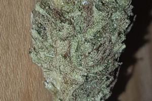 Skunk 47 Marijuana Strain image
