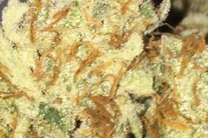 Sonic Screwdriver Marijuana Strain image