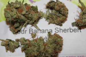 Sour Banana Sherbet Marijuana Strain image