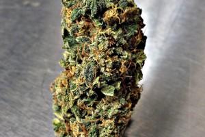 Sour Cherry Marijuana Strain image