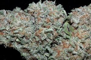 Strawberry Cough Marijuana Strain image