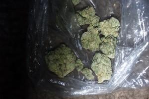 Superglue OG Marijuana Strain image