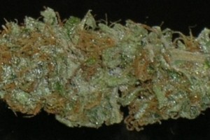 Sweet Cheese Marijuana Strain image