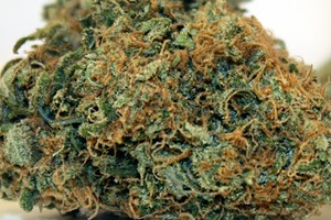 Thai Marijuana Strain image