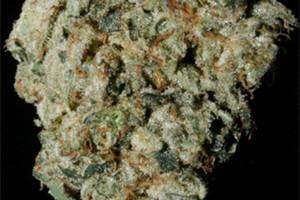 Trident Marijuana Strain image