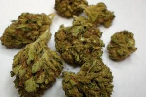 True OG Marijuana Strain image