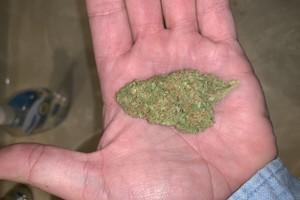 Vanilla Kush Marijuana Strain image