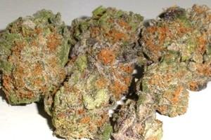 Velvet Kush Marijuana Strain image