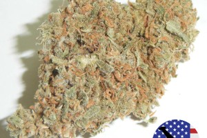 White Widow Marijuana Strain image