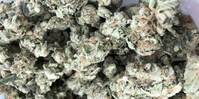 Organix Flower - Blueberry Haze
