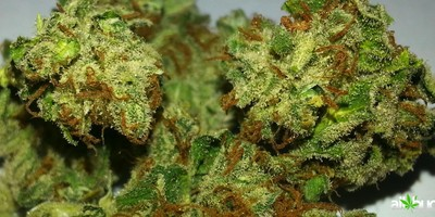 A-List Cannabis True OG