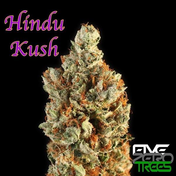 Hindu Kush Marijuana Strain Reviews Allbud