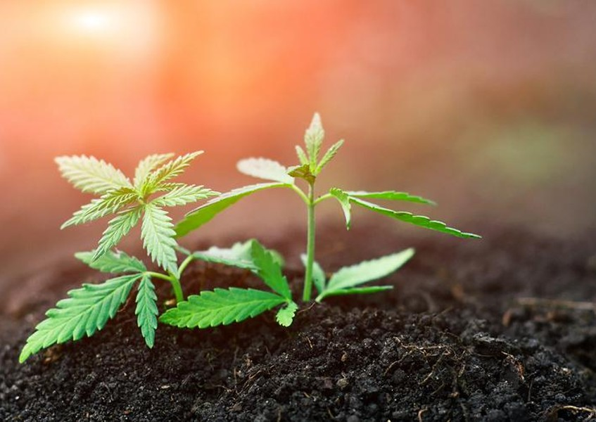 What is Super Soil and How It Can Help Grow Your Cannabis Plants ...